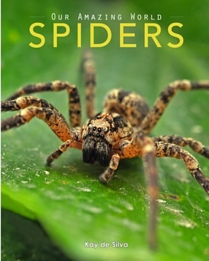Spiders: Amazing Pictures & Fun Facts on Animals in Nature
